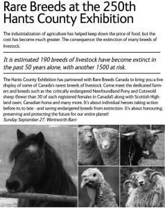 rare breeds hants co ex 250th